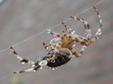 brrrrr een spin!