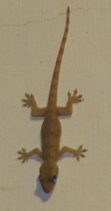Gecko's zijn leuk!!!