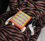 Pinkeltje ligt zoet te slapen onder het kersenpitkussentje dat hij van Mascha kreeg!