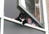 Luci-poes hangt al uit het raam te kijken als ik de straat in kom rijden... Schatje he?!