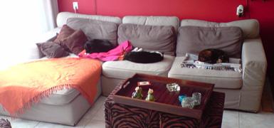 onze drie-kat-zits-bank