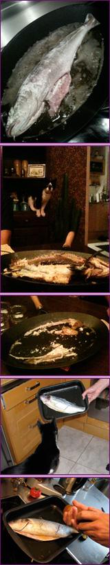 Het leukst dan, van zijn nieuwe hobby; vissen in de pan!